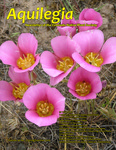 Aquilegia, Vol. 40 No. 3, Spring 2016: Newsletter of the Colorado Native Plant Society by May Loechell Turner and Charlie Turner